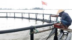Lũ lụt không lo mất cá, thu nhập khá nhờ lồng công nghệ Đan Mạch