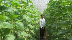 Trang trại chỉ trồng dưa chuột, dưa lưới, thu vội cũng được 2 tỷ/năm