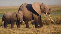 Hành động bất ngờ của voi mẹ khi voi con bị mắc kẹt được giải cứu