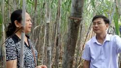 """Tuyên Quang: Liên kết thâm canh, mía cho """"vị ngọt"""""""