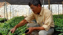 """Làm giàu khác người: Chuyện về """"ông trùm"""" cây """"tỷ đô"""" ở  xứ Lạng"""