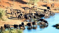 Lý do cứ khi hè đến, du khách lại đổ về Nam Phi để... tận hưởng mùa đông