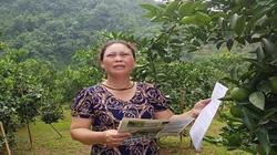 """Tuyên Quang: """"Phớt lờ"""" chỉ đạo của huyện, UBND xã làm khó người dân"""