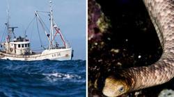 Vừa kéo lưới đánh cá, bị con vật trong lưới cắn tử vong