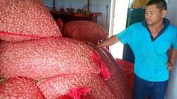 Hàng trăm tấn tỏi teo tóp, nguy cơ đổ bỏ vì không có người mua