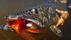 """""""Quái vật"""" ao hồ có hàm dài kỳ dị, răng sắc như dao"""