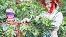 Giá nông sản hôm nay 9/10: Cà phê tăng 500 đồng/kg, giá tiêu ổn định
