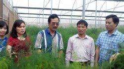 Chuyển đổi cây, con hiệu quả, huyện Phú Xuyên giàu nhanh