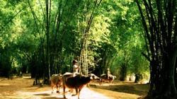 """""""Làng tôi"""" bức tranh âm thanh tiêu biểu về làng quê Việt Nam ngày ấy"""