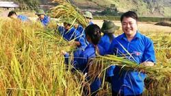 Áo xanh tình nguyện chạy đua với mùa vàng trên cao nguyên Tủa Chùa