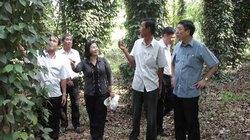 Nông dân Quảng Ngãi tiên phong trong xây dựng nông thôn mới