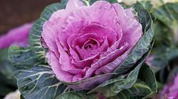 20.10, tự tay trồng cải hoa hồng tặng người phụ nữ mình yêu