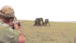 Video: Thợ săn nổ súng bắn đàn voi châu Phi, bị đuổi chạy trối chết