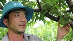 Trai phố núi trồng cây ra quả toàn là mắt, lãi 100 triệu đồng
