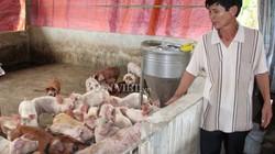 Giá heo hơi hôm nay 24/10: Yêu cầu giảm giá lợn hơi, khác nào làm khó nhà nông