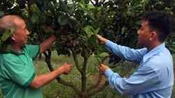 """Bình Phước: Hỗ trợ nông dân  làm xanh lại """"cây tỷ đô"""""""