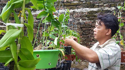 Làm giàu khác người: Cả làng trồng na, 1 mình yêu hoa ra trăm triệu