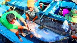 """Nạn vay nặng lãi, """"cò"""" dịch vụ, ép giá… ở Cảng cá Quy Nhơn"""