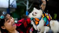 Ảnh: Hàng trăm chú cún tranh tài trong ngày hội thú cưng ở TP.HCM