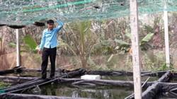Kỹ sư điện nuôi cá cảnh và tép cảnh
