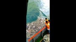 Tìm thấy mảnh vỡ máy bay Indonesia chở 189 người rơi xuống biển