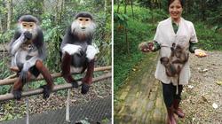 """Chiêm ngưỡng vẻ đẹp """"hoa khôi"""" trong thế giới khỉ, chỉ có ở Việt Nam"""