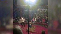 Nga: Hãi hùng sư tử diễn xiếc lao qua rào chắn cắn xé bé gái 4 tuổi