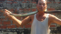 Thả đàn rắn dài ngoẵng trong vườn, khi muốn bắt đuổi như đuổi gà