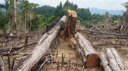 """Quảng Nam: Xét xử """"người nghèo"""" trong vụ phá rừng phòng hộ Tiên Lãnh"""