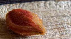 Ăn trái cây suốt ngày nhưng chưa chắc bạn nhận ra đây là hạt quả gì