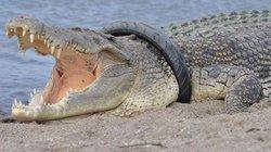 Sốc: 60% động vật hoang dã toàn cầu bị tiêu diệt trong 48 năm