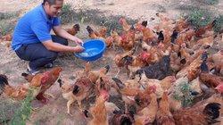 9X cầm bằng ĐH sư phạm Sinh học về quê trồng rừng, nuôi gà