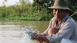 Miền Tây mùa lũ rút: Cá theo nước ra kênh, rạch rất nhiều