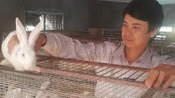 Nam Định: Nuôi cả ngàn thỏ trắng bán cho Nhật, lãi 40 triệu/tháng