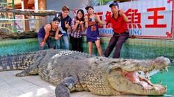 """Cá sấu lớn nhất ở châu Á bị khách TQ ném chảy máu xem """"có thật không"""""""