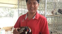 Thầy giáo vùng cao nuôi loài chim ăn ít, ưa làm dáng, có 30 triệu/tháng