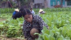 Thách thức lớn đến năm 2020: 15.000 HTX nông nghiệp làm ăn hiệu quả