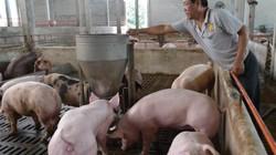 Giá nông sản tuần qua: Giá tiêu đứng im, cà phê tăng nhẹ; giá lợn hơi Công ty CP bán 51.000 đồng/kg