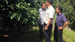 """Bí quyết """"bắt"""" đất nghèo nuôi cây ra nhiều quả để nông dân giàu"""