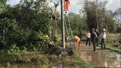 TT-Huế: Trâu lăn đùng ra chết khi ăn cỏ cạnh trụ điện