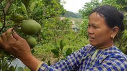 """Nơi trồng """"lung tung"""" các loại cây ăn trái, """"hái"""" mỗi năm cả trăm triệu"""