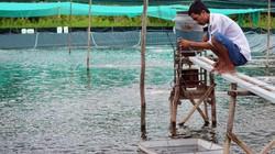 Bỏ hầm đất liều chuyển sang nuôi tôm trải bạt, có ngay tiền tỷ