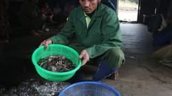 Cận cảnh đặc sản chuột ăn hạt sâm đãi khách quý ở núi Ngọc Linh
