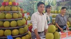 Phú Thọ: Lần đầu tiên tổ chức lễ hội bưởi Đoan Hùng