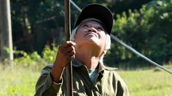 Dân săn nhà nghề căng tai, dõi mắt tìm bắt ong ở ngược ngàn Hương Sơn