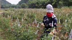 Sau 5 năm, thu nhập của người dân Hua La tăng từ 6 lên 29 triệu đồng.