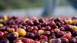 """Giá nông sản hôm nay 19/11: Cả giá cà phê lẫn giá tiêu đều """"ảm đạm"""""""