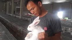 Làm giàu ở nông thôn: Bỏ nghề máy xúc về nuôi thỏ, lãi 15 triệu/tháng
