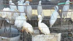 Chợ động vật hoang dã lớn nhất miền Tây vẫn còn... hoang dã