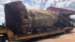 Vụ xe chở cây 'siêu khủng': Bị phạt tiền, cắt bỏ phần quá khổ
